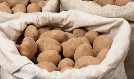 Potato_New