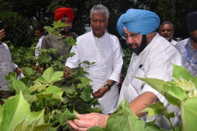 Punjab CM Promises Strict Action Against Suppliers of Spurious Pesticides & Seeds