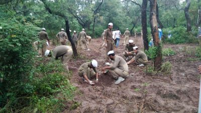 Nirankari devotees planted trees praised by Punjab Forest Department